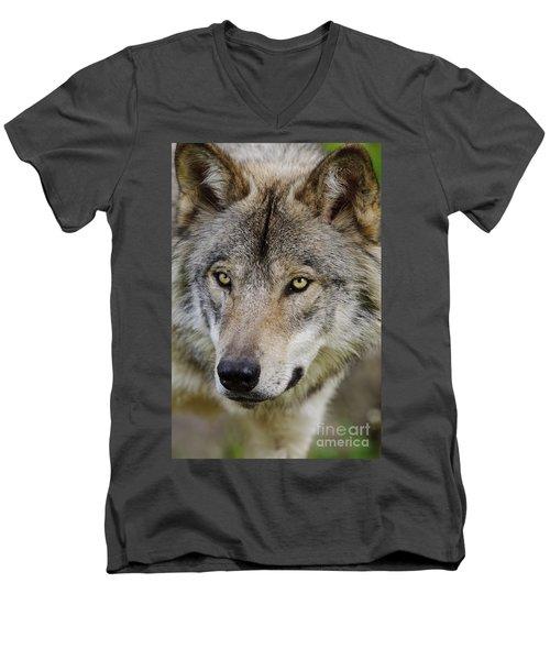 Timber Wolf Portrait Men's V-Neck T-Shirt