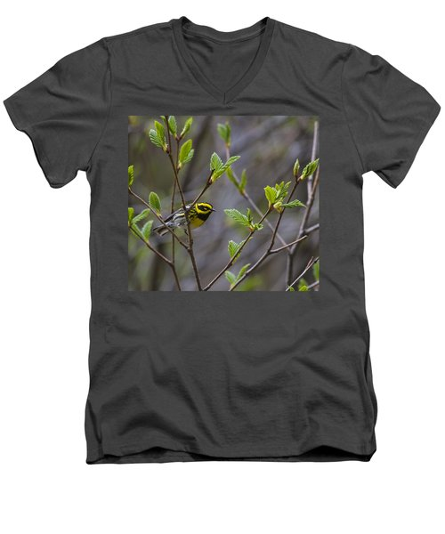 Townsends Warbler Men's V-Neck T-Shirt
