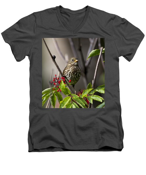 Fox Sparrow Men's V-Neck T-Shirt