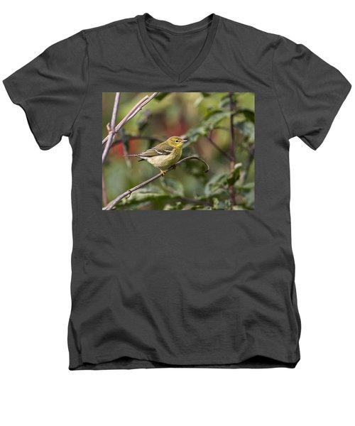 Blackpoll Warbler Men's V-Neck T-Shirt