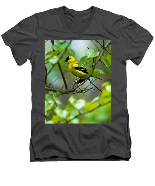 Men's V-Neck T-Shirt featuring the photograph American Goldfinch by Robert L Jackson