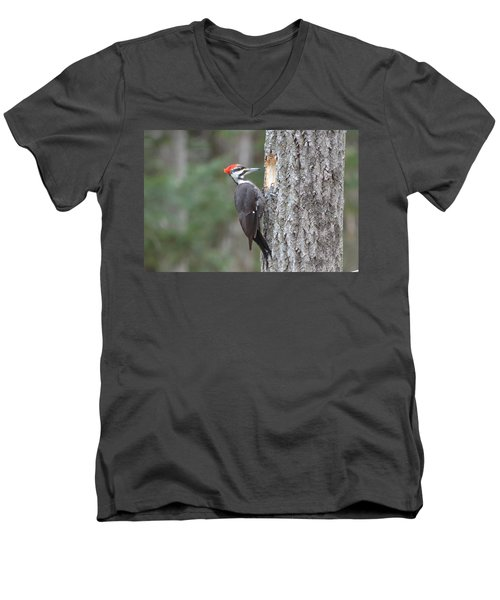 Pileated Woodpecker Men's V-Neck T-Shirt