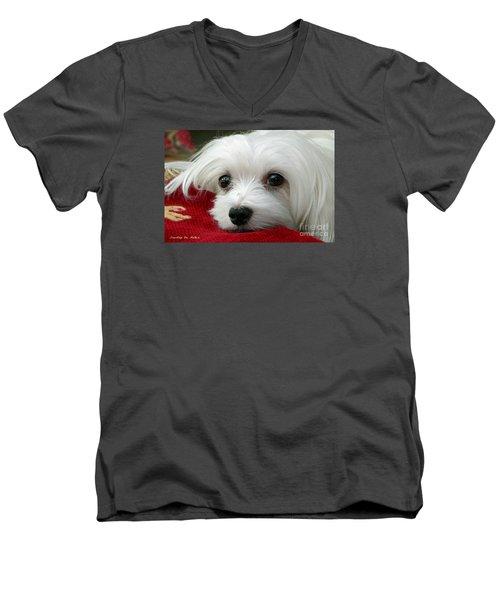 Snowdrop The Maltese Men's V-Neck T-Shirt by Morag Bates