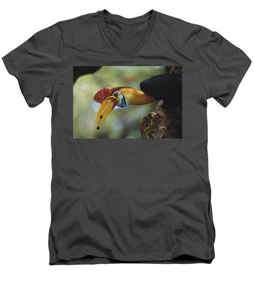 Sulawesi Red-knobbed Hornbill Male Men's V-Neck T-Shirt by Tui De Roy