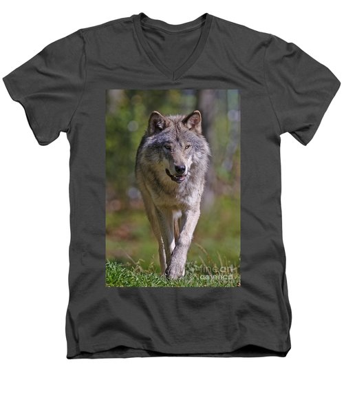 Men's V-Neck T-Shirt featuring the photograph Timber Wolf  by Wolves Only