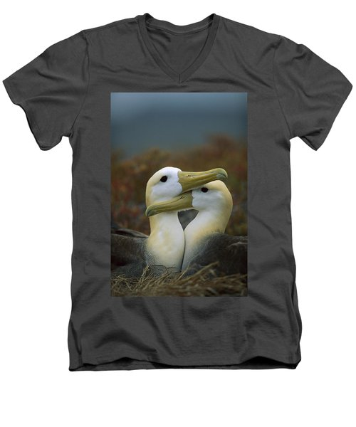 Waved Albatross Pair Bonding Galapagos Men's V-Neck T-Shirt