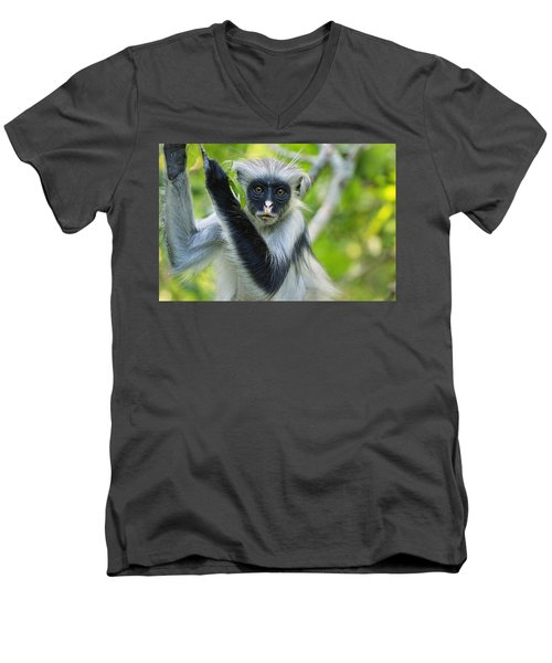 Zanzibar Red Colobus In Tree Jozani Men's V-Neck T-Shirt
