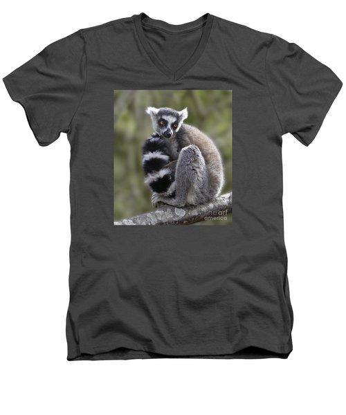 Ring-tailed Lemur Men's V-Neck T-Shirt by Liz Leyden
