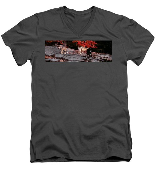 Timber Wolves Under A Red Maple Tree - Pano Men's V-Neck T-Shirt by Les Palenik