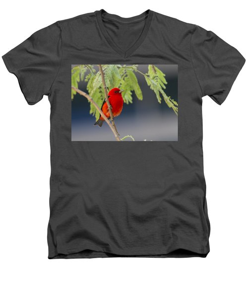 Pretty Boy  Men's V-Neck T-Shirt