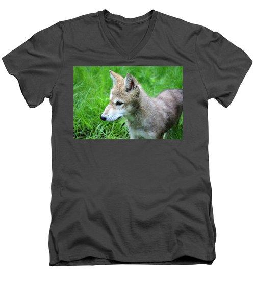 Gray Wolf Pup Men's V-Neck T-Shirt