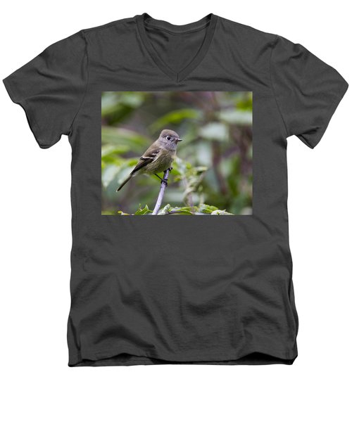 Alder Flycatcher Men's V-Neck T-Shirt