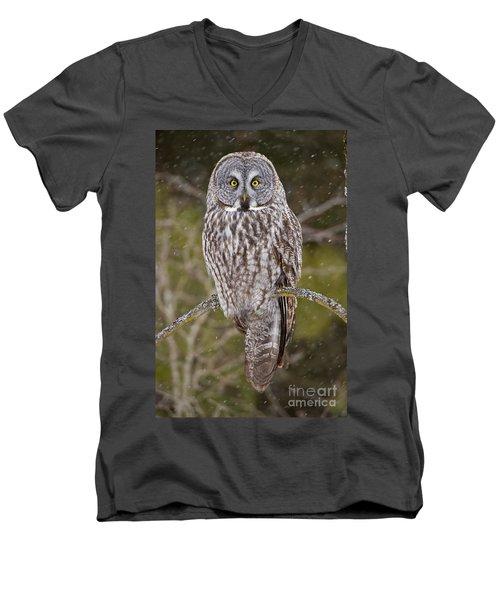 Great Gray Owl Men's V-Neck T-Shirt