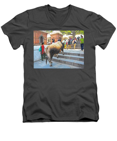 A Holy Cow Climbing Steps From Bagmati River In Kathmandu-nepal  Men's V-Neck T-Shirt