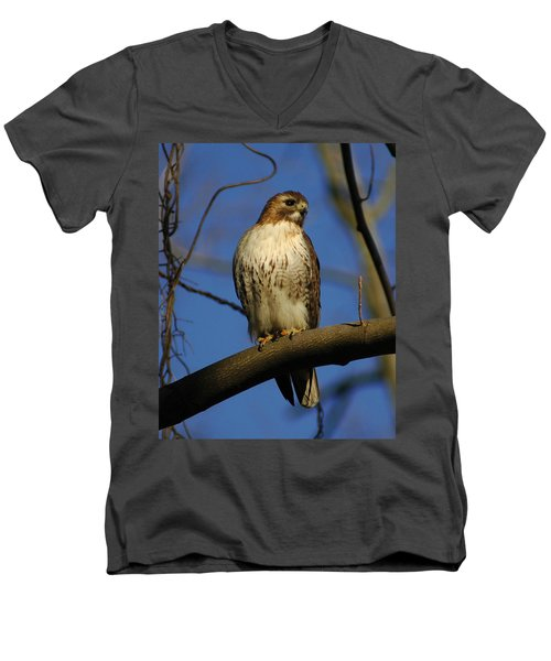 Men's V-Neck T-Shirt featuring the photograph A Red Tail Hawk by Raymond Salani III