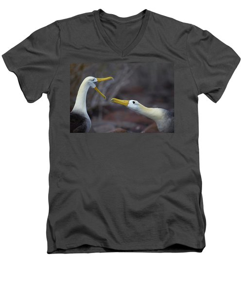 A Wave Albatross Couple In A Courtship Men's V-Neck T-Shirt