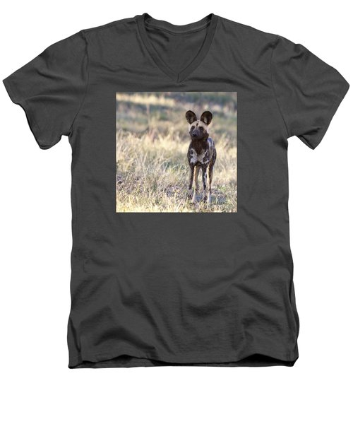 African Wild Dog  Lycaon Pictus Men's V-Neck T-Shirt