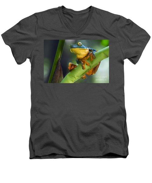 Agalychnis Calcarifer 4 Men's V-Neck T-Shirt