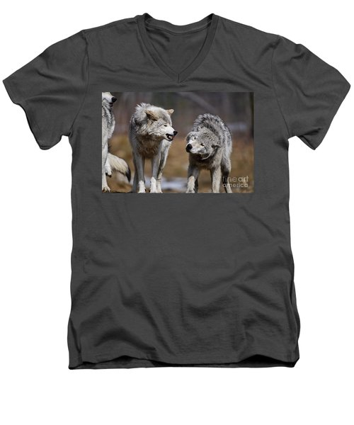 Men's V-Neck T-Shirt featuring the photograph Alpha Displeasure by Wolves Only
