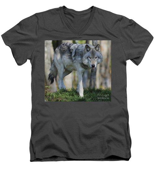 Alpha... Men's V-Neck T-Shirt