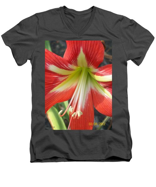 Men's V-Neck T-Shirt featuring the photograph Amarylis Full Bloom by Belinda Lee