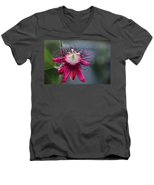 Amazing Passion Flower Men's V-Neck T-Shirt
