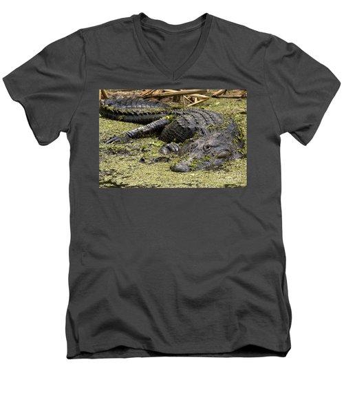American Alligator Smile Men's V-Neck T-Shirt