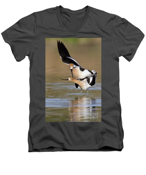American Avocets Men's V-Neck T-Shirt by Bryan Keil