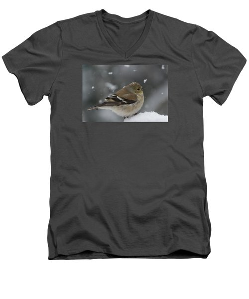 American Goldfinch In Winter Men's V-Neck T-Shirt