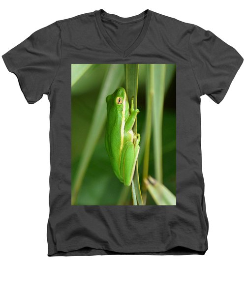 American Green Tree Frog Men's V-Neck T-Shirt