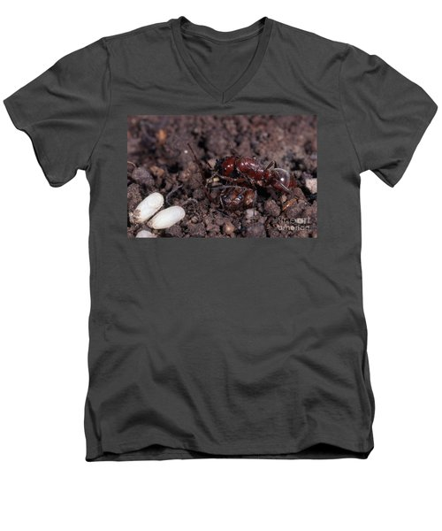 Ant Queen Fight Men's V-Neck T-Shirt by Gregory G. Dimijian, M.D.