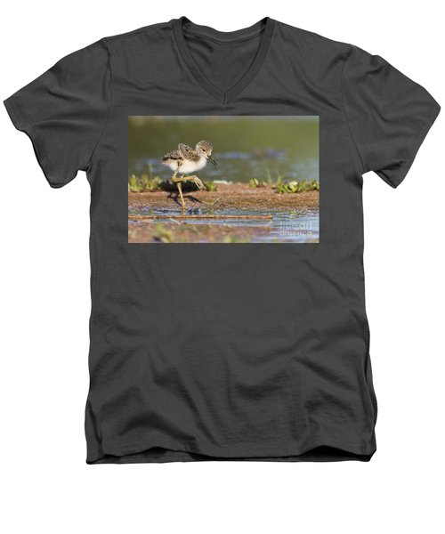 Baby Black-necked Stilt Exploring Men's V-Neck T-Shirt