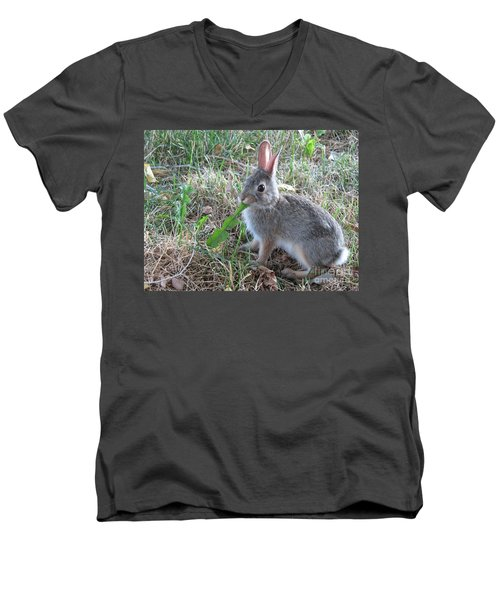 Baby Bunny Eating Dandelion #01 Men's V-Neck T-Shirt by Ausra Huntington nee Paulauskaite