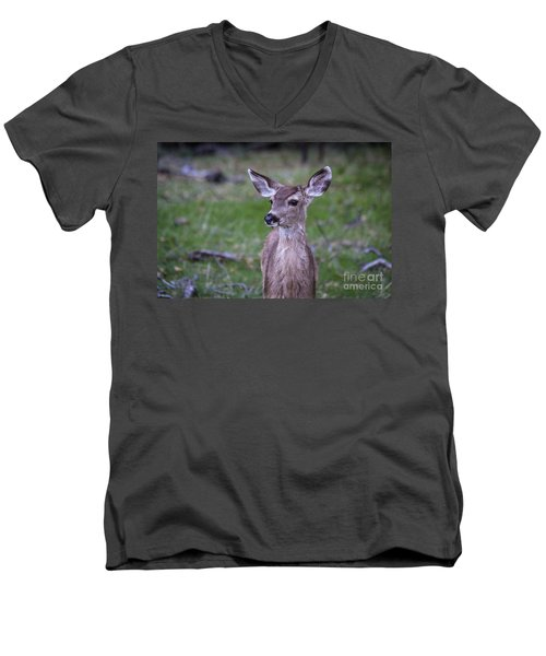 Men's V-Neck T-Shirt featuring the photograph Baby Deer by Vincent Bonafede