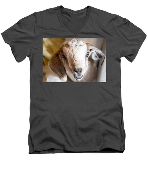 Baby Goat Face Men's V-Neck T-Shirt