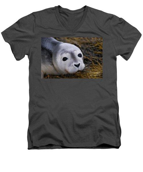 Baby Seal Men's V-Neck T-Shirt by DejaVu Designs