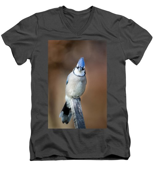 Backyard Birds Blue Jay Men's V-Neck T-Shirt by Bill Wakeley