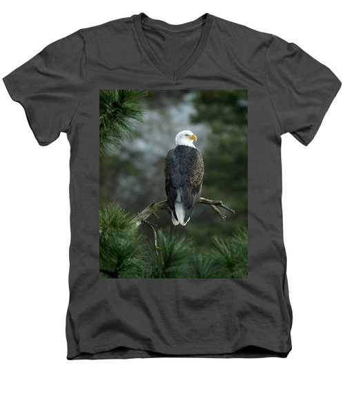 Bald Eagle In Tree Men's V-Neck T-Shirt