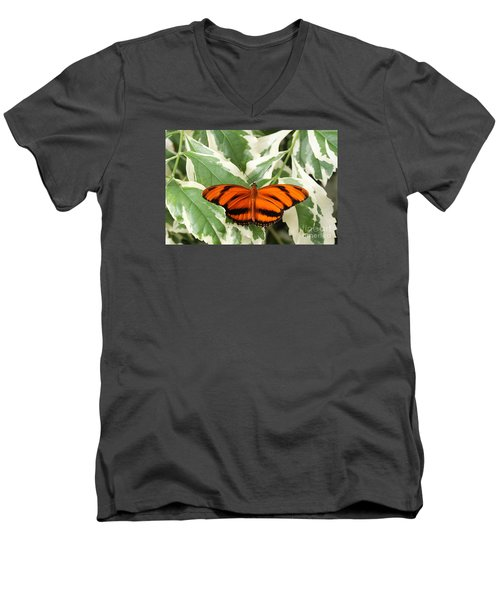 Banded Orange Longwing Butterfly Men's V-Neck T-Shirt by Judy Whitton