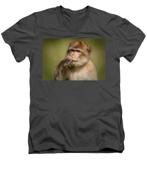 Barbary Macaque Men's V-Neck T-Shirt