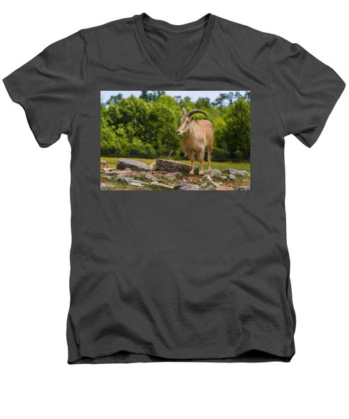 Barbary Sheep Men's V-Neck T-Shirt