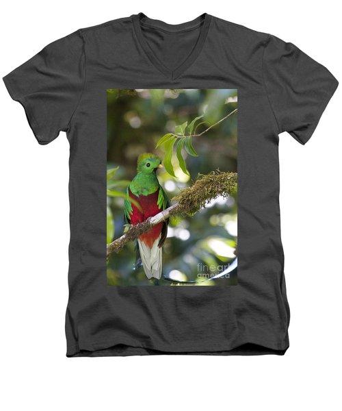 Beautiful Quetzal 1 Men's V-Neck T-Shirt