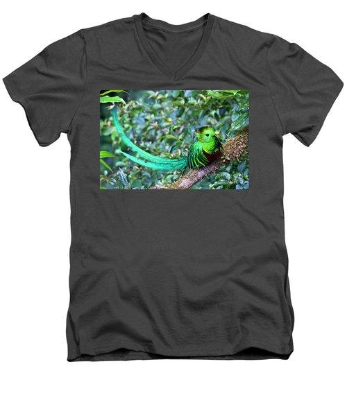 Beautiful Quetzal 3 Men's V-Neck T-Shirt by Heiko Koehrer-Wagner