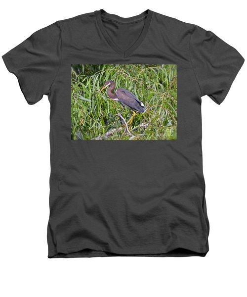 Beautiful Tricolored Heron Men's V-Neck T-Shirt by Carol  Bradley