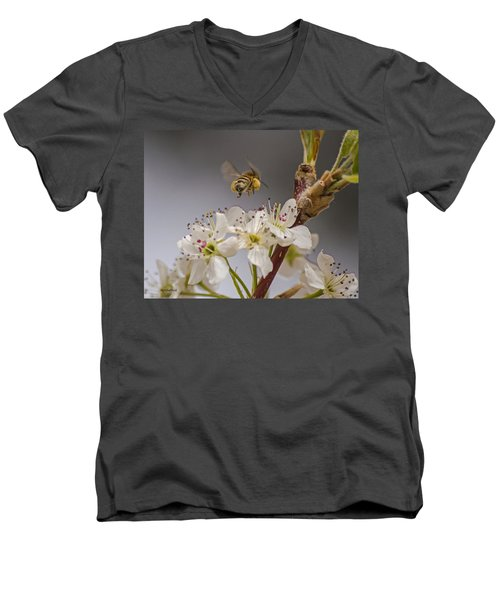 Bee Working The Bradford Pear 2 Men's V-Neck T-Shirt