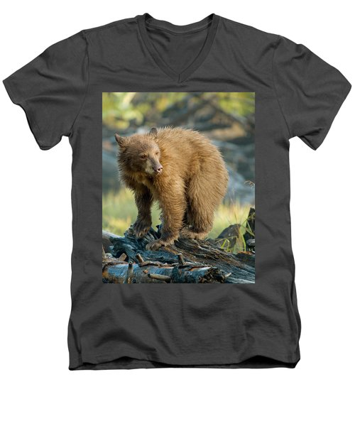Men's V-Neck T-Shirt featuring the photograph Black Bear by Doug Herr