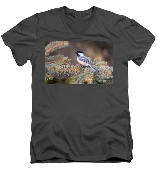 Black-capped Chickadee Men's V-Neck T-Shirt