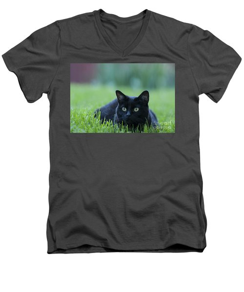 Black Cat Men's V-Neck T-Shirt by Juli Scalzi