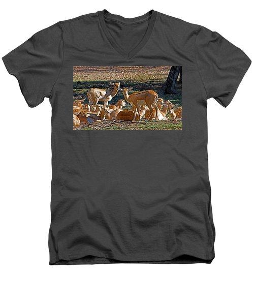 Blackbuck Female And Fawns Men's V-Neck T-Shirt