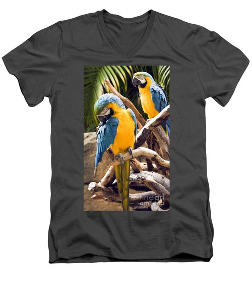 Blue And Yellow Macaw Pair Men's V-Neck T-Shirt